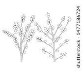 vector hand drawn holly  ilex... | Shutterstock .eps vector #1477186724