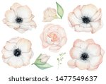 Watercolor Anemone Rose Flower...