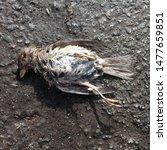 Macro Photo Of A Dead Bird....