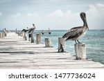 Close up of pelicans standing...