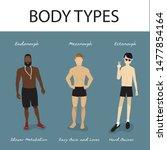 body types   endomorph ...   Shutterstock .eps vector #1477854164