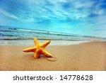 Starfish On The Beach   Best...