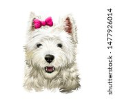 Cairn Terrier Dog Breed...