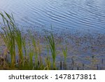 Pond With Tall Grass And...