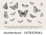 butterflies. set of elements... | Shutterstock .eps vector #1478329061