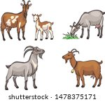 Set Of Different Goats. Vector...