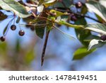 Stock photo dragonflies perched on the branch tree and flowers 1478419451