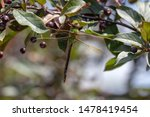 Stock photo dragonflies perched on the branch tree and flowers 1478419454