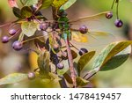 Stock photo dragonflies perched on the branch tree and flowers 1478419457