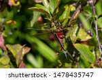 Stock photo dragonflies perched on the branch tree and flowers 1478435747