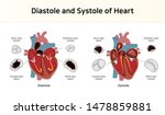 diastole and systole of heart | Shutterstock .eps vector #1478859881