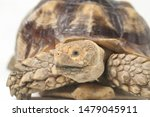 Stock photo african spurred tortoise also know as african spur thigh tortoise geochelone sulcata isolated on 1479045911
