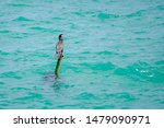 Cormorant Sits On A Stick In...