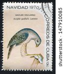 Small photo of CUBA - CIRCA 1970: stamp printed by Cuba, shows Bird Accipiter gundlachi, circa 1970