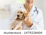 Stock photo vet examining dog and cat puppy and kitten at veterinarian doctor animal clinic pet check up and 1479228404