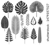 tropical leaf silhouette set... | Shutterstock .eps vector #1479357527