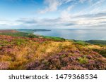 Heather In Bloom On The North...