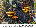 Two Clusters Of Yellow And...