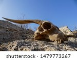 Dry Goat Skull Bone  Goat Skul...