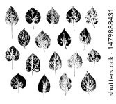 imprints of leaves of trees and ...   Shutterstock .eps vector #1479888431