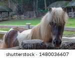 miniature horse are another...   Shutterstock . vector #1480036607