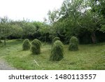Old Fashioned Haystacks On A...