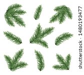 Fir Tree Branch Set  Isolated...