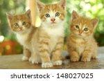 Three Little Cute Red Kitten...