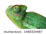 Cute Funny Chameleon  ...