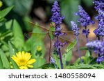 Stock photo dragonflies perched on the branch tree and flowers 1480558094