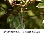 Stock photo dragonflies perched on the branch tree and flowers 1480558121