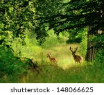 Whitetail Deer Bucks In Summer...