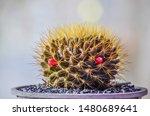 Close Up Of Cactus Filled...