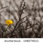 Image Of A Beautiful Yellow...
