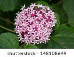 A Beautiful Wild Flower  It's...