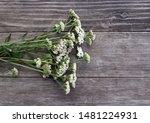 Closeup Of Flower Achillea...