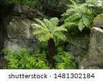 The Fronds Of An Australian O...