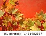 Orange Maple Leaves On Red...