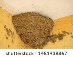A Swallows Mud Nest Located In...