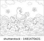 Hen With Little Chicks Walking...