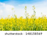 yellow wild flowers on the... | Shutterstock . vector #148158569