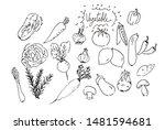 hand drawn set of vegetables... | Shutterstock . vector #1481594681