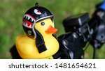 Yellow rubber duck in a black helmet bicycle flashlight. - stock photo
