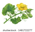 Branch With Yellow Flower And ...