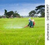 Farmer Spray The Fertilizer In...
