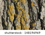 Closeup Of A Tree Bark Texture...