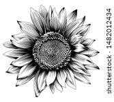 Sunflower Illustration....
