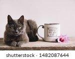 Still Life Of Gray Cat  Purple...