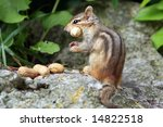 Chipmunk With A Peanut In Her...