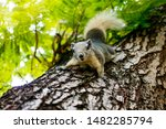 Squirrel In The Parks With...